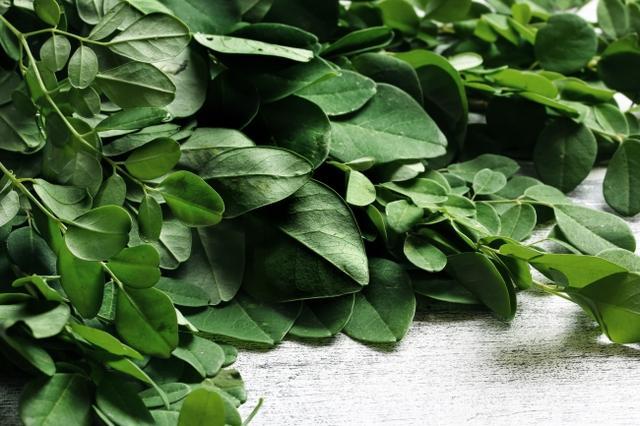 """画像: タンパク質、カルシウム、鉄、ビタミン、β-カロテン、食物繊維、亜鉛、GABA、ポリフェノールなど、90種類以上の栄養素が含まれその栄養価の高さから""""奇跡の木""""とも呼ばれる植物。(写真はモリンガの葉) ■食物繊維 レタスの18倍 ■鉄分 ほうれん草の10倍 ■ビタミンE ケールの19倍 ■βカロテン かぼちゃの13倍 ect‥ 栄養価が高く、健康や美容によい成分が摂れる理想的な食材"""