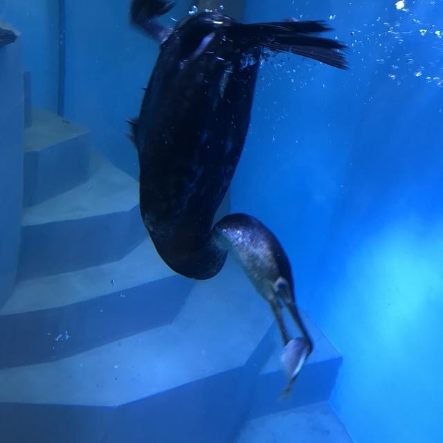 画像: 海の見える動物園へGO!
