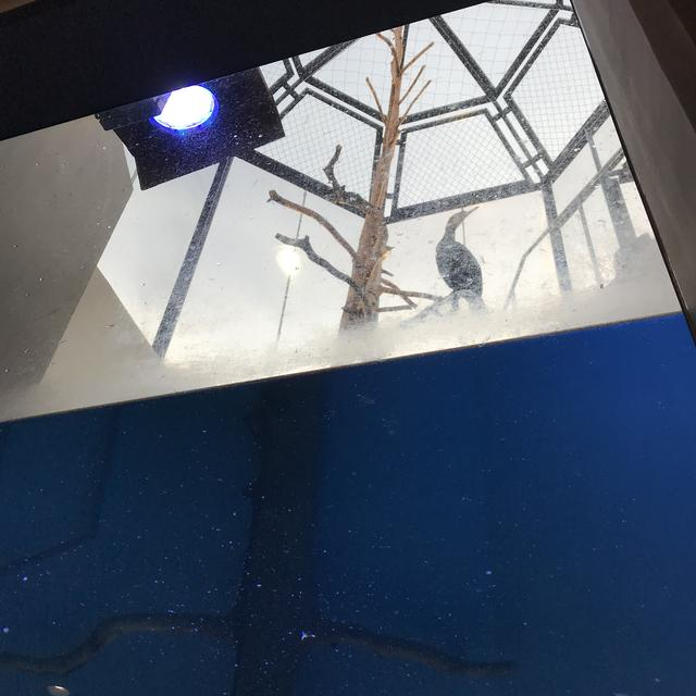 画像6: 【体験レポ】ウミウと爬虫類がいっぱい❤︎日立市かみね動物園「はちゅウるい館」がオープン!