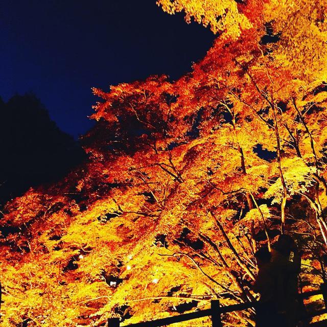 画像4: 美しすぎるライトアップは、香嵐渓で。
