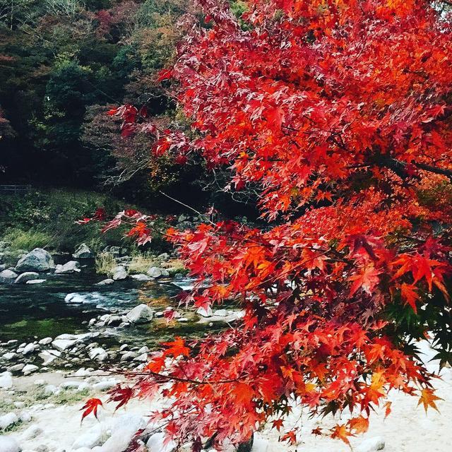 画像2: 美しすぎるライトアップは、香嵐渓で。