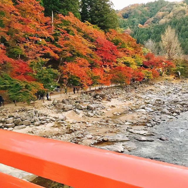 画像1: 美しすぎるライトアップは、香嵐渓で。