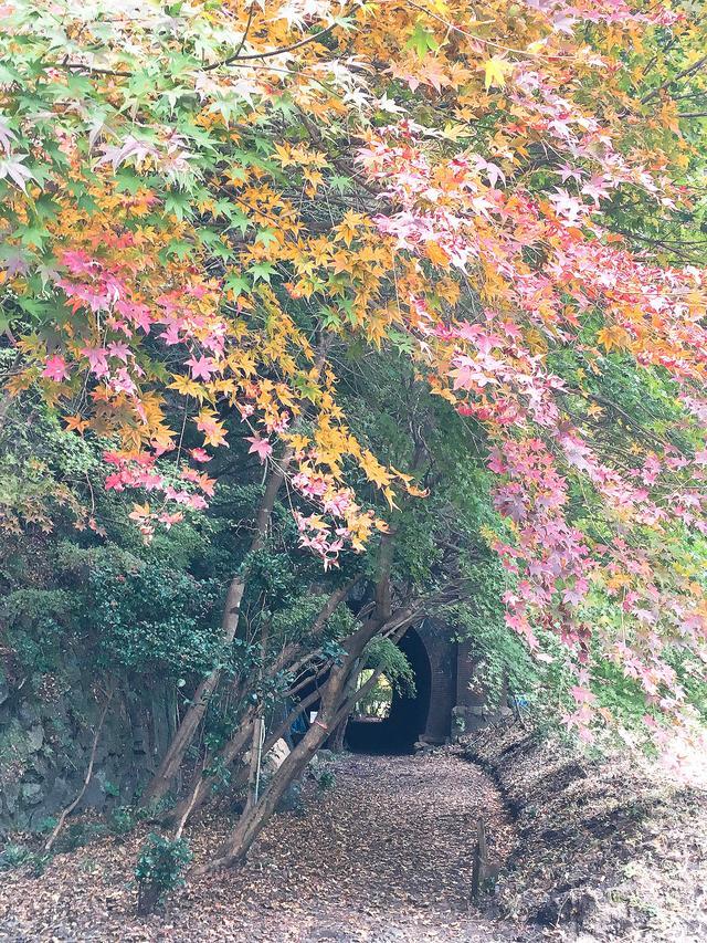 画像1: 40年間眠っていた廃線トンネルが実は絶景?!
