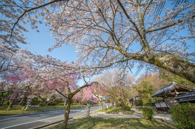 画像10: 【星野リゾート ロテルド比叡】春の京都・比叡山をおさんぽしながら楽しく厄払い「比叡山やくばらい散歩・春」