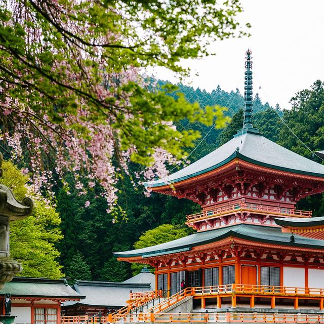 画像9: 【星野リゾート ロテルド比叡】春の京都・比叡山をおさんぽしながら楽しく厄払い「比叡山やくばらい散歩・春」