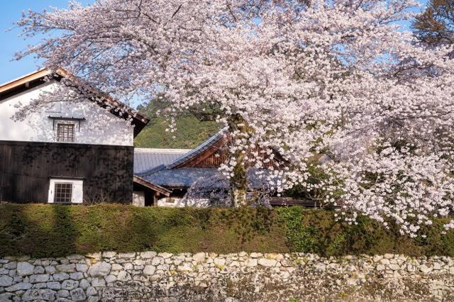 画像1: 【星野リゾート ロテルド比叡】春の京都・比叡山をおさんぽしながら楽しく厄払い「比叡山やくばらい散歩・春」