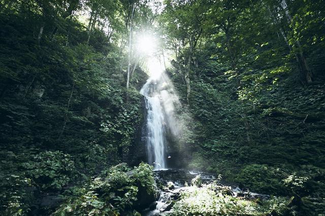 画像3: 4つの体験を通して苔の魅力を満喫できる宿泊プラン