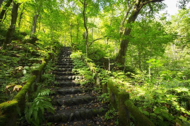 画像4: 4つの体験を通して苔の魅力を満喫できる宿泊プラン