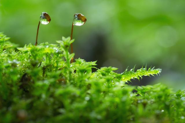 画像1: 4つの体験を通して苔の魅力を満喫できる宿泊プラン