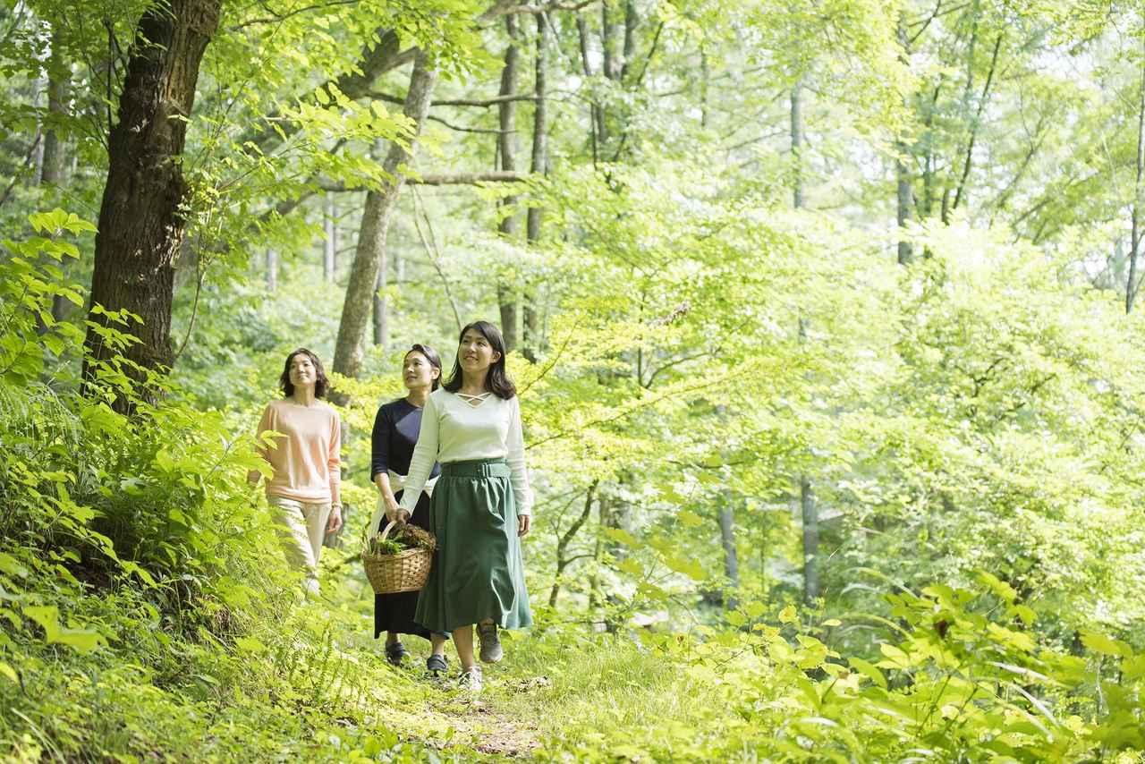 画像5: 【軽井沢星野エリア ハルニレテラス】軽井沢の森のテラスで味わうワインと食事 「森のプライベートワインランチ」