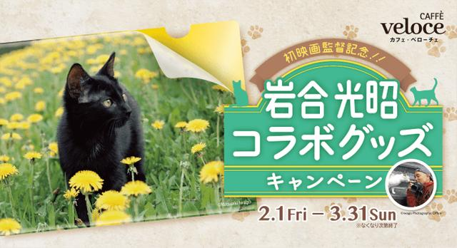 画像1: 「季節のねこクリアファイル」が貰える♪動物写真家の岩合光昭コラボグッズキャンペーンを開催!