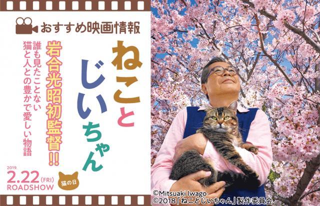 画像4: 「季節のねこクリアファイル」が貰える♪動物写真家の岩合光昭コラボグッズキャンペーンを開催!