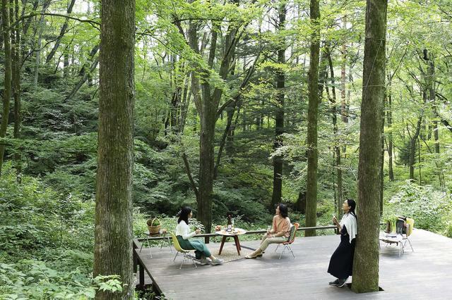 画像1: 【軽井沢星野エリア ハルニレテラス】軽井沢の森のテラスで味わうワインと食事 「森のプライベートワインランチ」