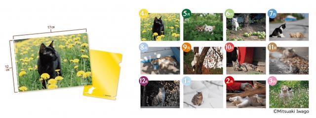画像2: 「季節のねこクリアファイル」が貰える♪動物写真家の岩合光昭コラボグッズキャンペーンを開催!