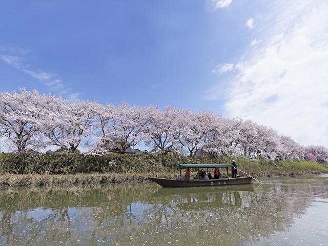 画像1: 界 加賀(石川県・山代温泉) 「大聖寺川貸切り流し舟」で花見開催