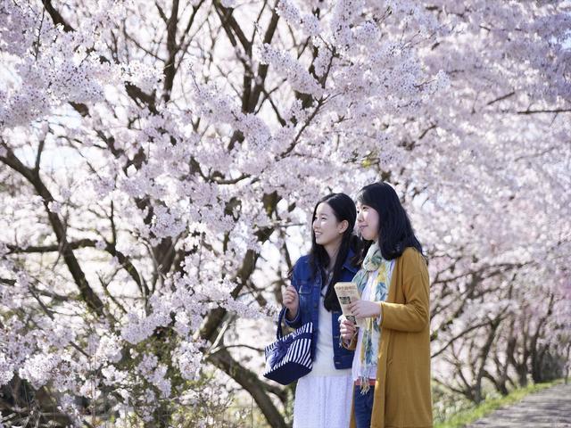 画像2: 界 加賀(石川県・山代温泉) 「大聖寺川貸切り流し舟」で花見開催