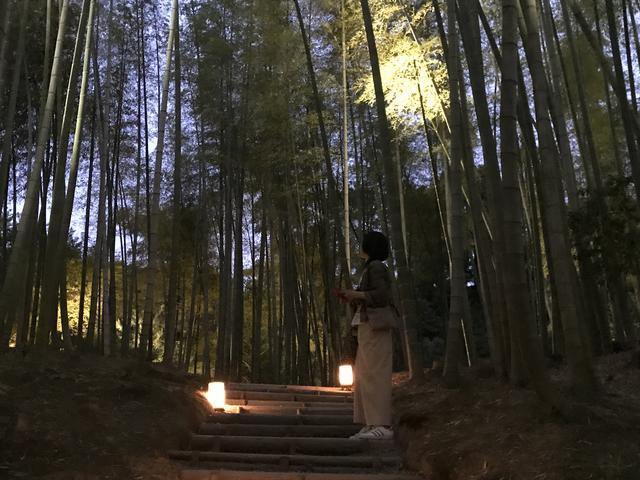 画像: 空に向かってまっすぐと勢いよく伸びている竹林