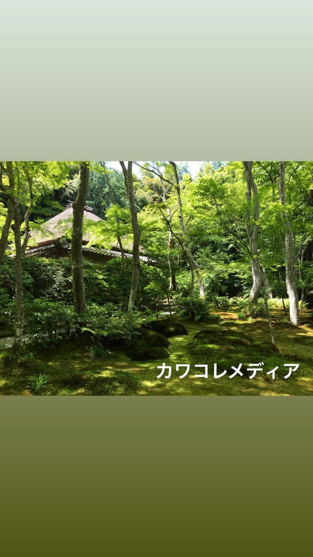 画像2: 【体験レポ】「そうだ 京都、行こう。」苔と新緑&京の涼めぐり 後編〜苔と新緑編〜