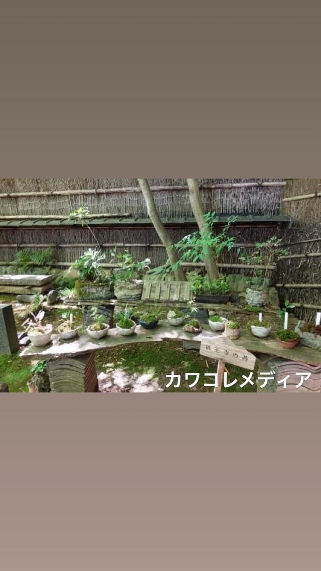 画像3: 【体験レポ】「そうだ 京都、行こう。」苔と新緑&京の涼めぐり 後編〜苔と新緑編〜