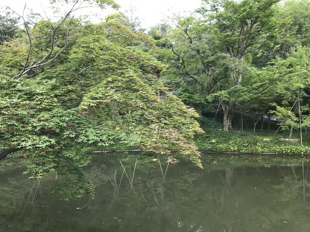 画像1: 秋だけでなく初夏もオススメな「高台寺」