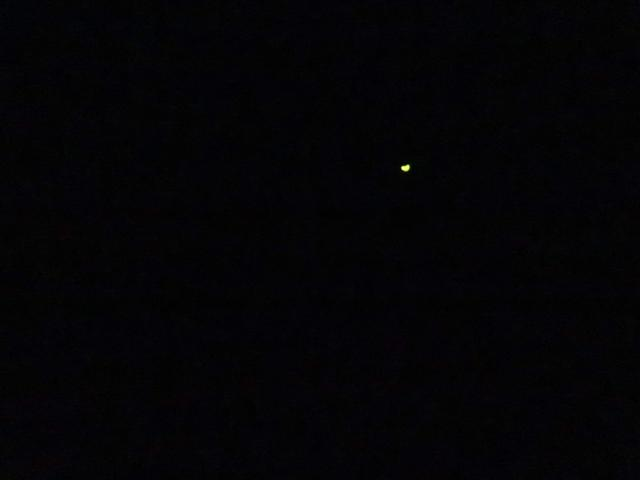 画像: ほのかに光る蛍(2F)