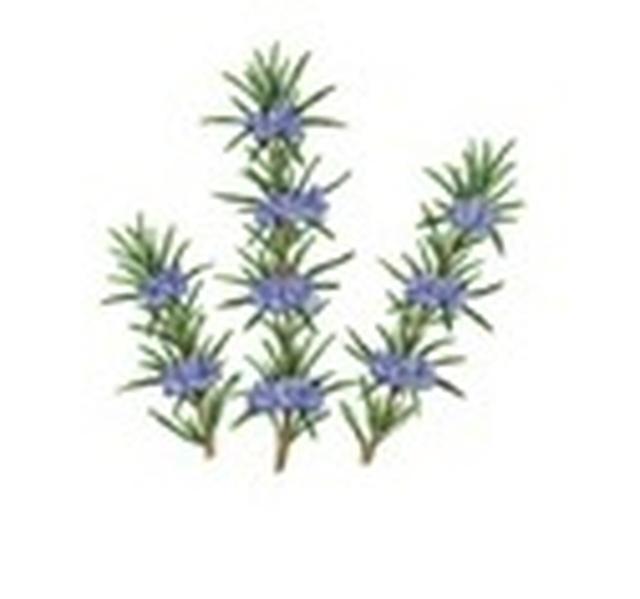 """画像4: 金木犀が香る新シリーズ『Flora Notis JILL STUART』から""""スウィートオスマンサス""""が登場!"""