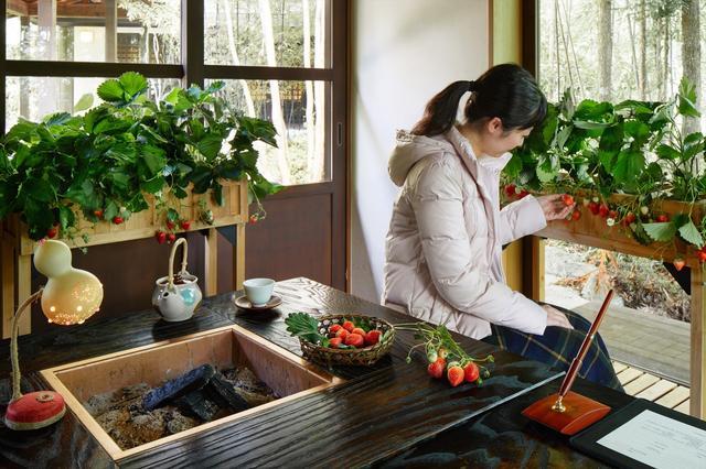 画像: 【星野リゾート】界 温泉旅館でいちごを存分に味わう「いちご滞在」登場!