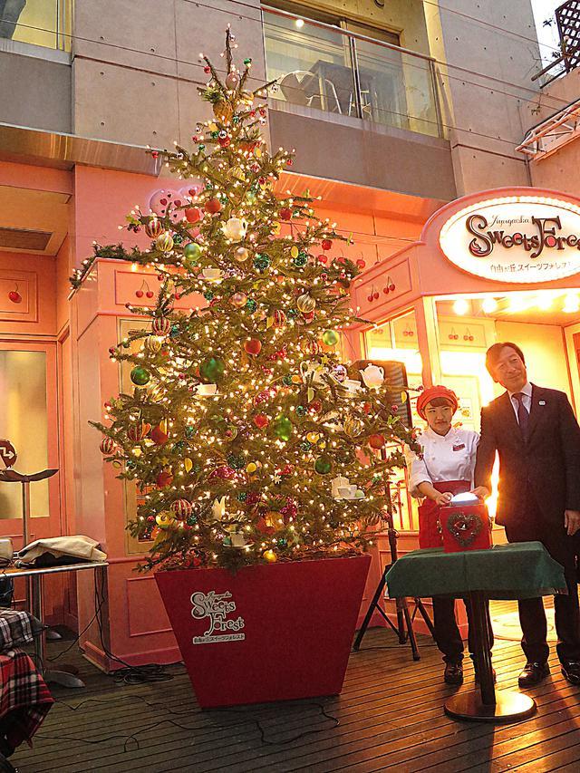画像: クリスマスツリーは本物のモミの木 11月20日にはクリスマスツリーの点灯式が行われました。光り輝く大きなクリスマスツリーは本物のモミの木です。クリスマス後は森に還されます。
