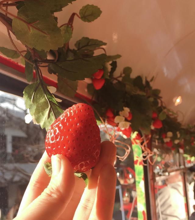 画像2: 【試食レポ】佐賀県の新しいブランドいちご「いちごさん」を食べながら都内を巡る「いちごさんバス」運行!