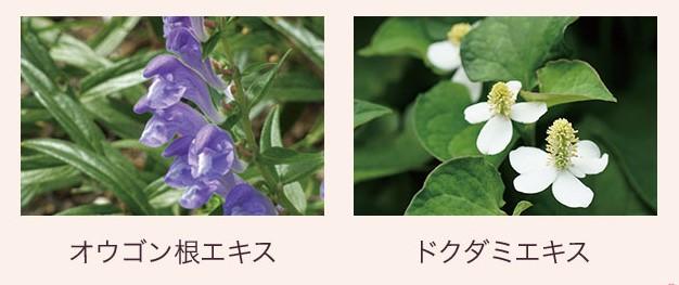 画像: 花粉などの外部刺激から、頭皮や髪を守る(整肌) 「オウゴン根エキス」「ドクダミエキス」