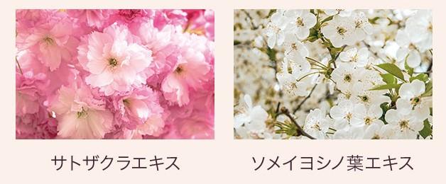 画像: 冬の乾燥や、春に向けて急激に増加する紫外線ダメージをケア(保湿・整肌) 「サトウザクラエキス」「ソメイヨシノ葉エキス」