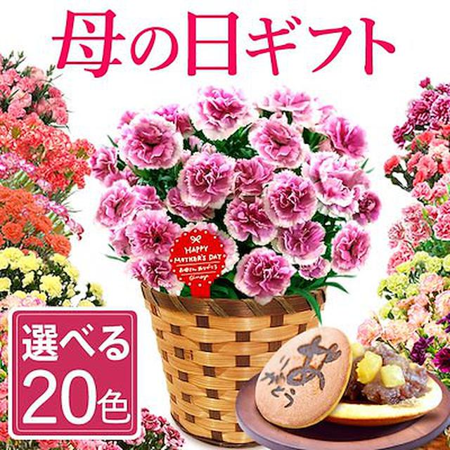 画像: [Qoo10] おいもや : 母の日 カーネーション鉢植えスイーツ付き : 工具・DIY