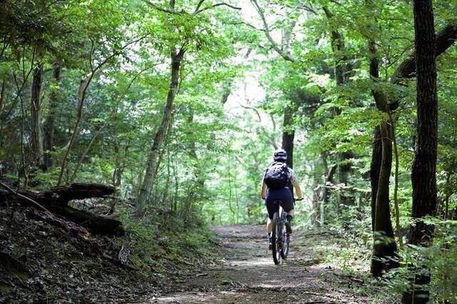 画像: マウンテンバイクで巡る伊豆修善寺の恵み -プライベートガイド付きツアー- アクティビティ「Autumn & Winter Breeze Biking」