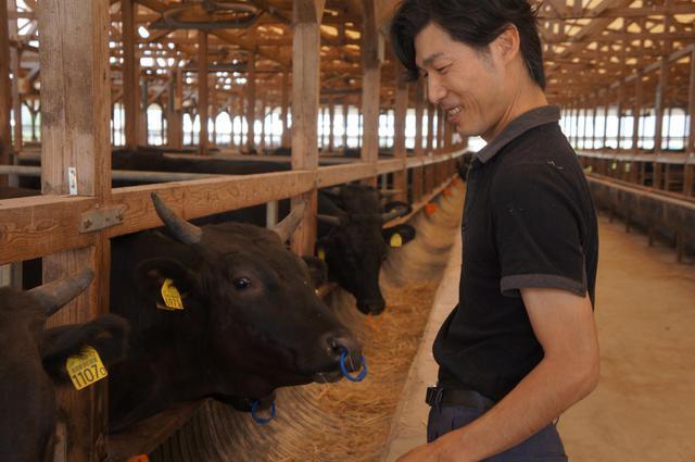 画像: 佐賀牛を育てる山下牛舎さん