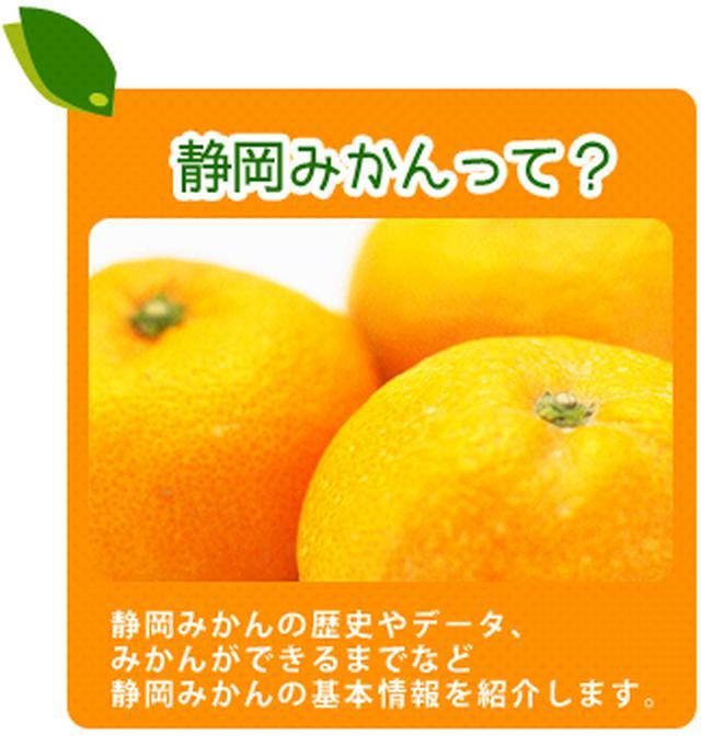 画像: 静岡みかんスペシャルサイト:JA静岡経済連柑橘委員会