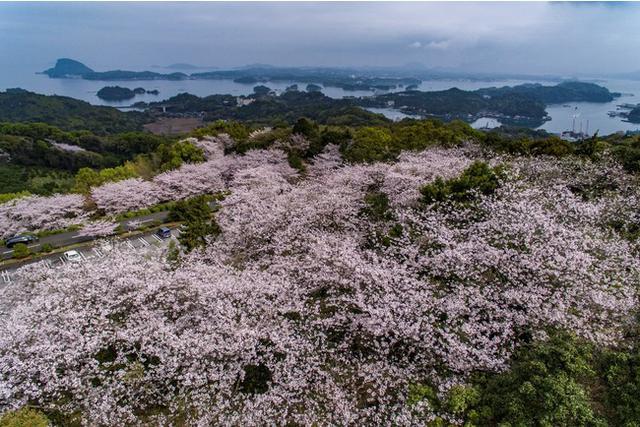 画像2: 日本の夕陽百選「高舞登山(たかぶとやま)」、桜の名所「千巌山(せんがんざん)」
