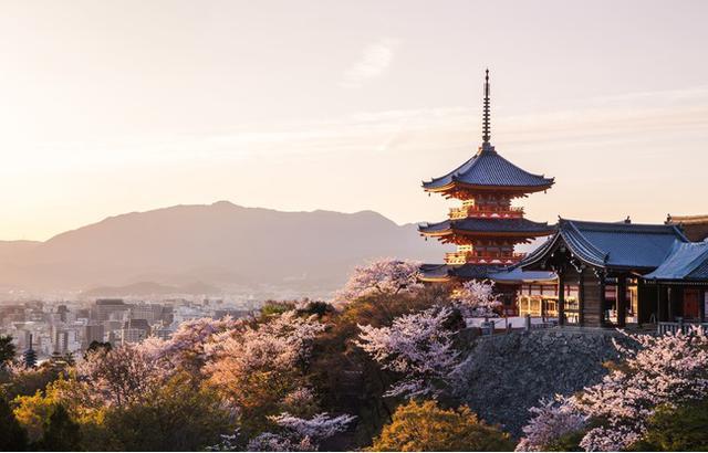 画像1: 【春の桜旅へ出かけよう!】シェフ特製お花見セットとともに、日本の春を満喫する旅をお届け!