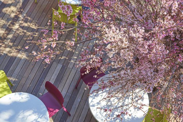 """画像3: 【KIHACHI】今年は、""""お花見気分""""をおうちデリバリー!"""