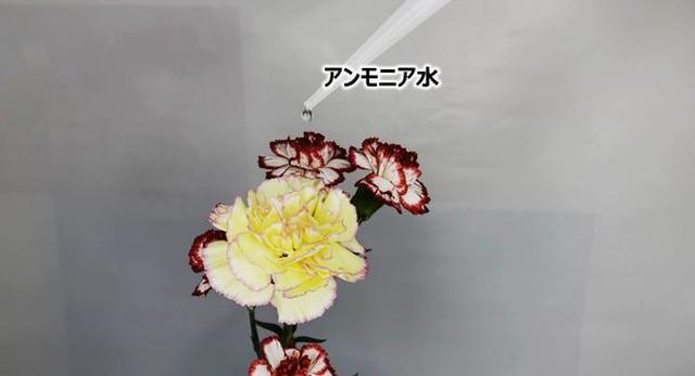 画像1: [実験] 本当に花の香りはそのままに、悪臭だけ消せるのか!?