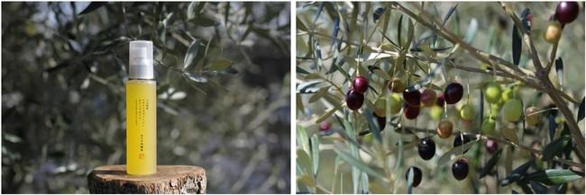 画像1: 自然の恵みと繊細な技術の賜物! 小豆島産オリーブオイルが生きた新しい「オイル化粧水」とは
