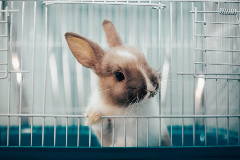 画像: 【ペット】うさぎを賃貸住宅で飼うときのポイント