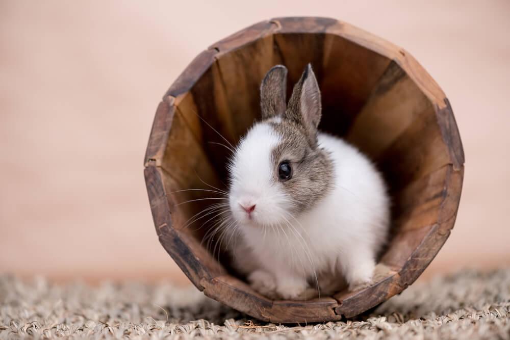 画像: 【ペット】うさぎの特徴や飼い方を紹介!部屋の工夫や健康管理のポイントとは?   くらしマグネット