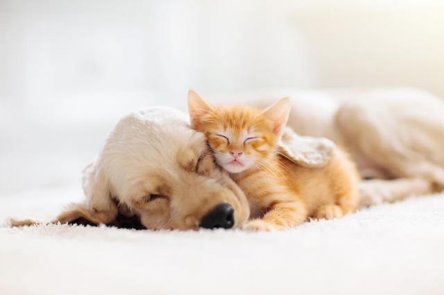 画像: 犬・猫の暑さ対策の前にチェックすべきこと