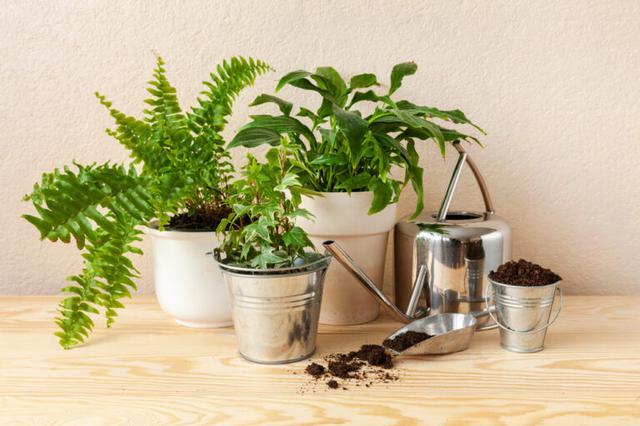 画像: インテリアとして観葉植物を選ぶ時のポイント