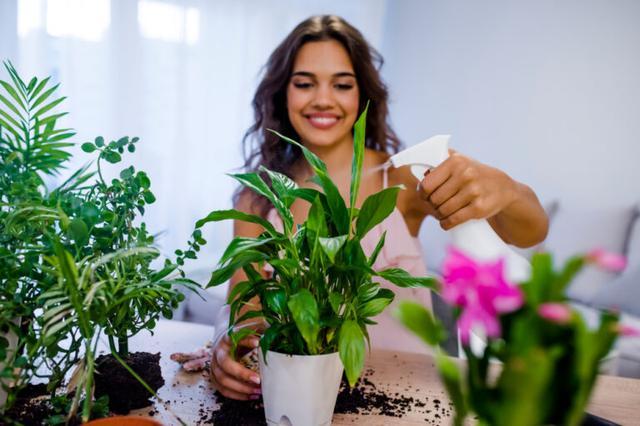 画像: 初心者でも育てやすい観葉植物5選