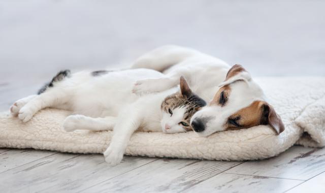 画像: チェック②犬・猫が熱中症になりやすい状況