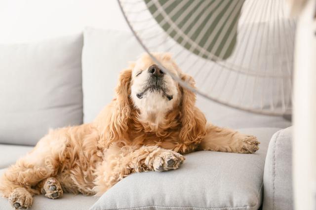 画像: 自宅でできる犬・猫の暑さ対策