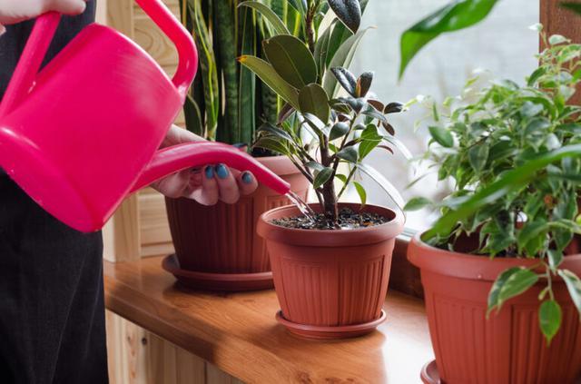 画像: 観葉植物の育て方のコツ