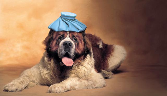 画像: チェック①犬・猫は体温調節が難しい