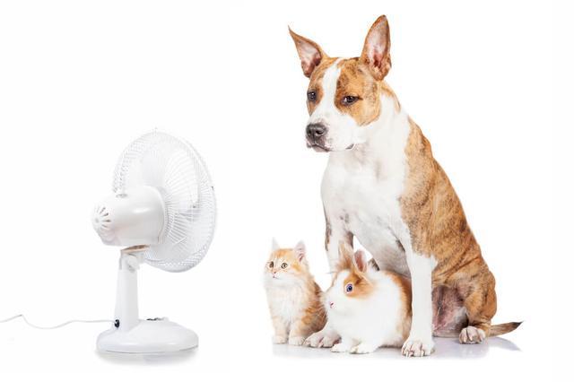 画像: 【ペット】犬・猫の暑さ対策を知っておこう!身近なものでできる対策とは | くらしマグネット